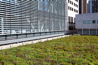 Claire Tow Theater's Green Roof - August 13th, 2012